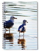 Gulls Spiral Notebook