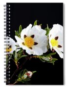 Gum Rockrose - Cistus Ladanifer In Portugal Spiral Notebook