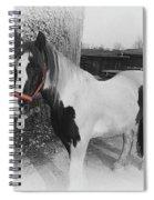 Gypsy Horse Spiral Notebook