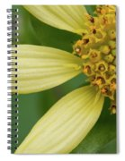 Hairy Leafcup #2 Spiral Notebook