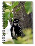 Downy Woodpecker 01 Spiral Notebook