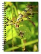 Halloween Pennant Dragonfly Spiral Notebook