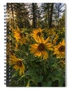 Hamblen Park Sunshine Spiral Notebook