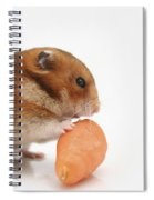 Hamster Eating A Carrot  Spiral Notebook