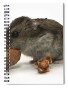 Hamster Eating A Walnut  Spiral Notebook