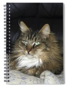 Handsome Cat Spiral Notebook