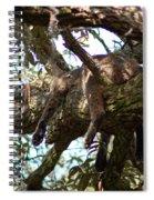 Hanging Around Spiral Notebook