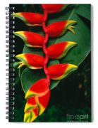 Hanging Heliconia Spiral Notebook