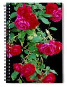 Hanging Roses 2593 Spiral Notebook
