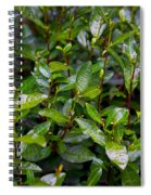 Hangzhou Tea Spiral Notebook
