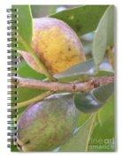 Haole Guava Spiral Notebook