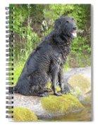 Happy Happy Dog At Dawn Spiral Notebook