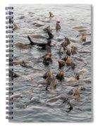Happy Harbour Seals Spiral Notebook