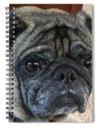 Happy Pug Spiral Notebook