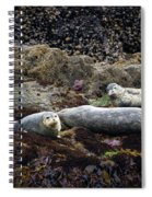 Harbor Seals Basking - Oregon Coast Spiral Notebook