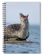 Harbour Seal Spiral Notebook