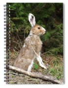 Hare That Spiral Notebook