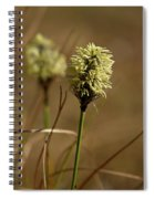 Hare's-tail Cottongrass 1 Spiral Notebook