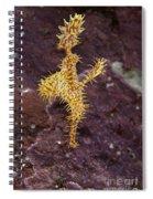 Harlequin Ghost Pipefish - Solenostomus Paradoxus Spiral Notebook