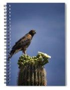 Harris Hawk Atop A Saguaro  Spiral Notebook
