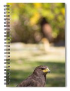 Harris Hawk Looking At Infinity Spiral Notebook