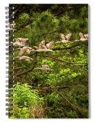 Harris Neck Ibis In Flight Spiral Notebook