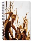 Harvest Corn Stalks - Gold Spiral Notebook