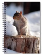 Has Anyone Seen My Nuts Spiral Notebook