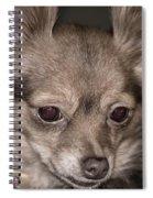 Hattie--foxy Chihuahua Spiral Notebook