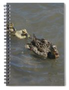 Having Your Duckies In A Row  Spiral Notebook