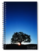 Hawaii Koa Tree Spiral Notebook