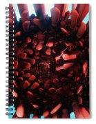 Hawaii Pencil Urchin Spiral Notebook