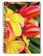 Hawaii Plumeria Flowers In Bloom Spiral Notebook