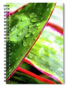 Hawaii Ti Leaves Morning Shower 559 Spiral Notebook