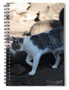 Hawaiian Feral Cat 2 Spiral Notebook