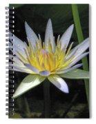 Hawaiian Water Lily 05 - Kauai, Hawaii Spiral Notebook
