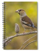 Hawfinch Coccothraustes Coccothraustes Spiral Notebook