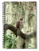 Hawk In Live Oak Hammock Spiral Notebook