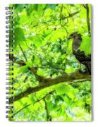 Hawk In Sycamore Spiral Notebook