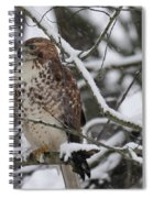 Hawk In Winter Spiral Notebook