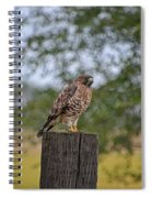 Hawk On A Fence Post Spiral Notebook