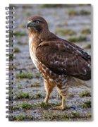 Hawk On A Walk Spiral Notebook