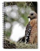 Hawk On Watch Spiral Notebook