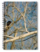 Hawk Spiral Notebook