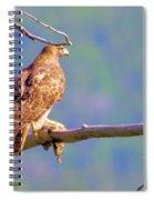 Hawk With Prey Spiral Notebook