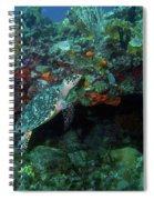 Hawksbill Sea Turtle 4 Spiral Notebook