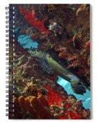 Hawksbill Sea Turtle 9 Spiral Notebook