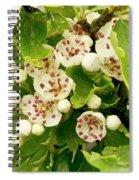 Hawthorn Gold Spiral Notebook