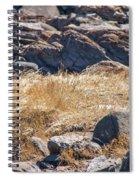 Hay Ocean Rocks Spiral Notebook