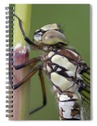 Head Of The Dragonfly Spiral Notebook